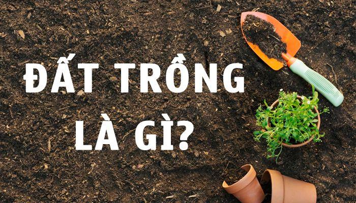 Đất trồng là gì? Thành phần và phân loại đất trồng cây